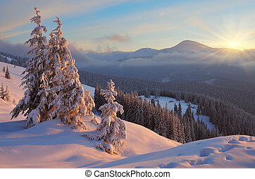 Colorful sunrise in the mountains in winter. Beautiful landscape in the morning. Carpathians, Ukraine, Europe. View of Mount Goverla