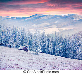 Colorful winter sunrise in the Carpathian mountains....