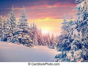 Colorful winter sunrise in the mountain forest.