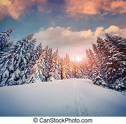 Colorful winter sunset in the mountain forest