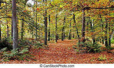 Colorful woods of the Netherlands 2