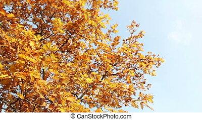 Colorfull Autumn