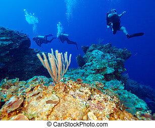 colorfull, rif, en, groep, van, duikers, cayo, largo, cuba