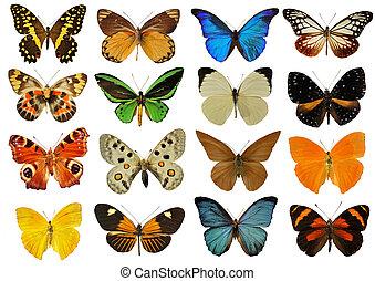colorfull, vlinder