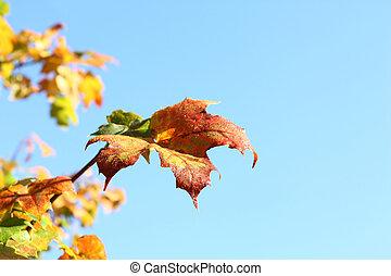 colori, autunno