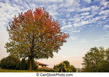 colori, d'autunno