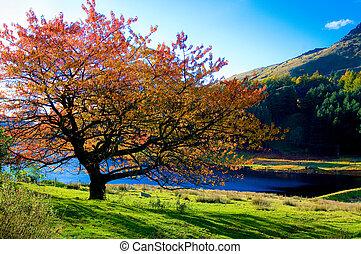 colorido, árbol, colores, autum, solitario