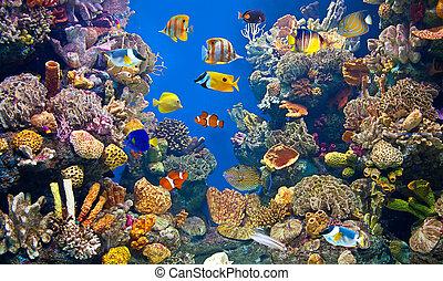colorido, acuario, y, peces
