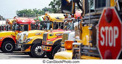 colorido, autobuses