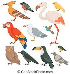 colorido, aves, conjunto