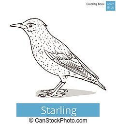 colorido, aves, vector, estornino, aprender, libro