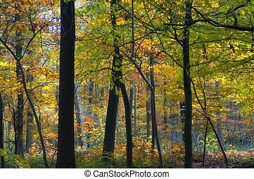 colorido, bosque de otoño
