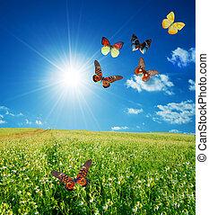 colorido, buttefly, primavera, campo