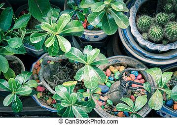 colorido, cacto, cerámico, jardín, flores, condos, ollas, primer plano, piedra, patio, singapur