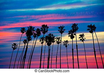 colorido, cielo, árboles, palma, puesta sol california