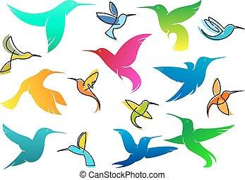 colorido, colibrí, aves