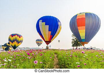 colorido, de aire caliente, globos, el volar encima, cosmos, flores, en, ocaso