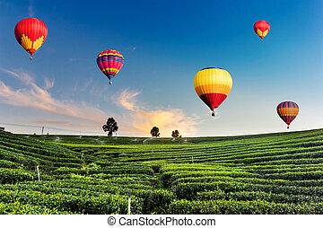 colorido, de aire caliente, globos, el volar encima, plantación de té, paisaje, en, ocaso