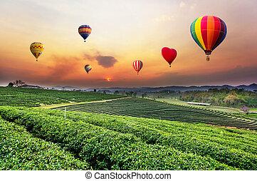 colorido, de aire caliente, globos, el volar encima, plantación de té, paisaje, en, sunset.