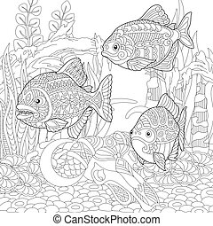 colorido, fishes., pirañas, página
