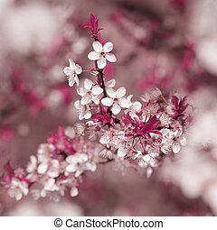 colorido, florecer, árbol, en, primavera, estación