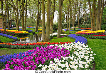 colorido, florecer, tulipanes, en, keukenhof, parque, en,...