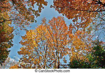 colorido, follaje de la caída