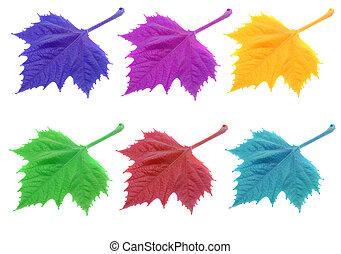 colorido, hojas, aislado, blanco, plano de fondo