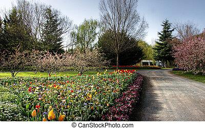 colorido, jardín