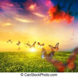 colorido, mariposas, el volar encima, primavera, pradera, con, flores