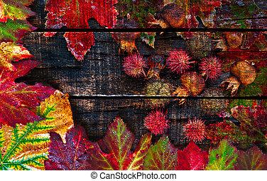colorido, mojado, otoño sale, arreglado, en, viejo, tabla de madera
