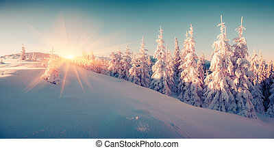 colorido, montaña, salida del sol, invierno, forest.
