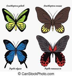 colorido, ornithoptera, ulises, tarjetas, insectos, goliath, rumanzovia, croesus, conjunto, grande, saludo, vuelo, verano, papilionidae, realista, colección, scrapbook., butterflies.