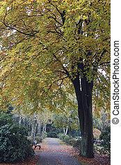 colorido, otoño, en, un, parque