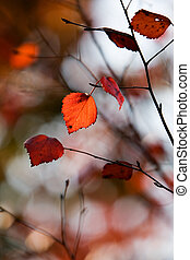 colorido, otoño