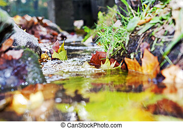 colorido, otoño sale, formaciónde filas, agua