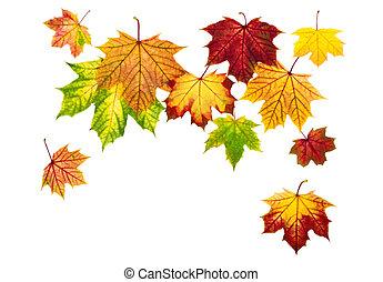 colorido, otoño sale, se venir abajo