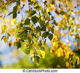 colorido, outono