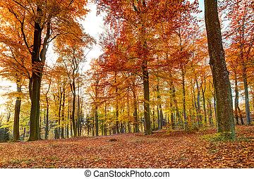 colorido, paisaje de otoño, con, amarillo, árboles