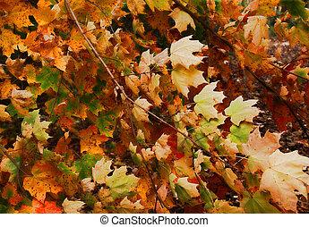 colorido, permisos de otoño
