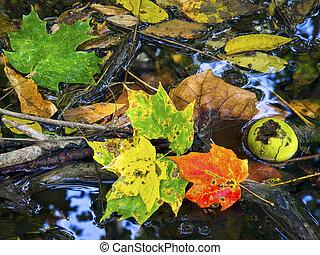 colorido, permisos de otoño, en, un, charco