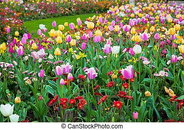 colorido, primavera, verano, jardín, flores