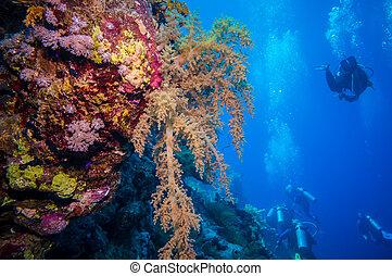 colorido, submarino, arrecife, con, coral, y, esponjas