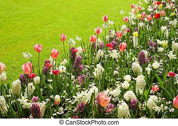 colorido, tulipanes, jacintos, y, narcisos, en, primavera