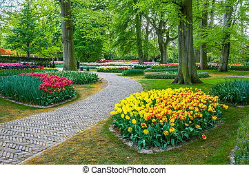 colorido, tulipanes, keukenhof, parque, lisse, en, holanda