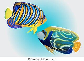 colorido, uno, principalmente, vector, fishes., illustration., coral, angelfish