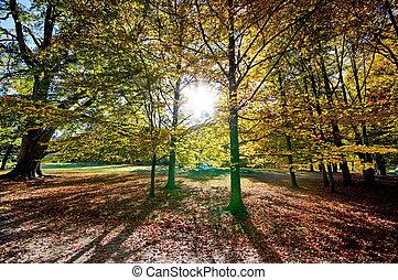 coloridos, árvores outono