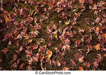 coloridos, backround, imagem, de, caído, outono sai, para, fundo