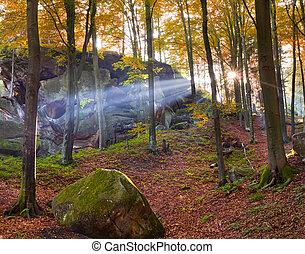 coloridos, floresta outono, em, a, manhã