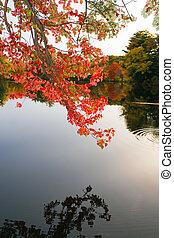 coloridos, folhagem baixa, sobre, a, água